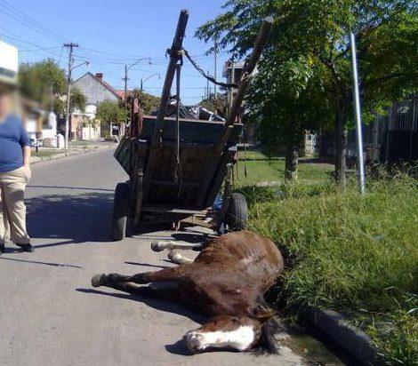 FIM DAS CARROÇAS: Vereador quer proibir maus-tratos e exploração animal.